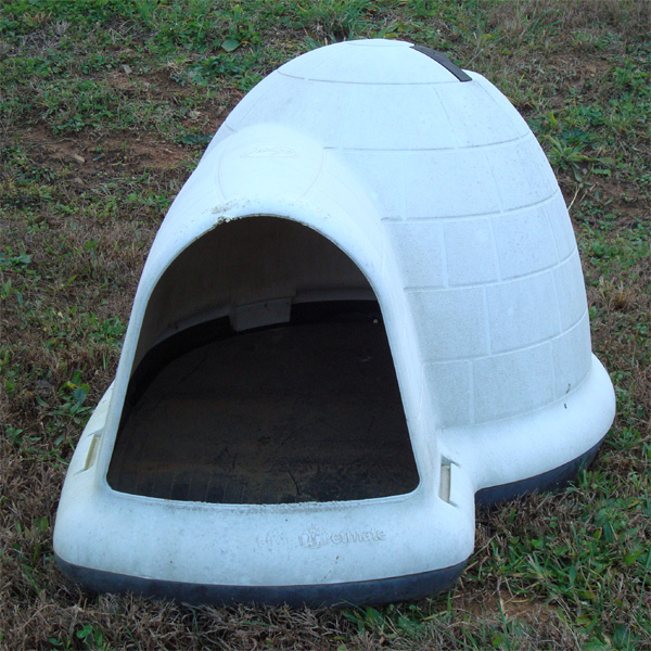 Dog Igloo You Say Images Frompo